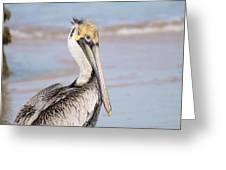 Pelican In Need Greeting Card