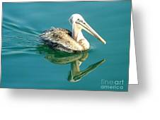 Pelican In San Francisco Bay Greeting Card