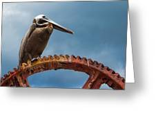 Pelican In St. Croix Greeting Card
