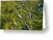 Pelican In The Trees Greeting Card