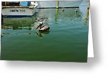 Pelican John 3/16 Boat Greeting Card