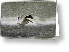 Pelican Landing In Color Greeting Card by Thomas Young