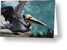Pelican Lift Off Greeting Card