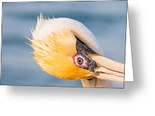 Pelican Looking Upside Down Greeting Card