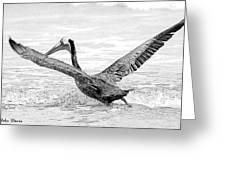 Pelican Moment Greeting Card
