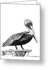 Monterey Pelican Pooping Greeting Card