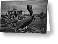 Pelican On Pier Greeting Card