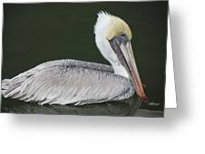 Pelican On The Intercostal Greeting Card