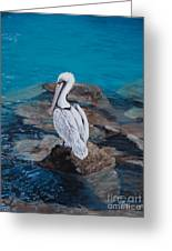 Pelican On The Rocks Greeting Card