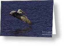 Pelican Over Water Greeting Card