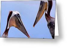 Pelican Pair Greeting Card