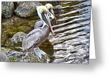 Pelican Pals Greeting Card
