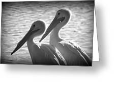 Pelican Pals Greeting Card