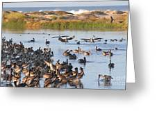 Pelican Party Greeting Card