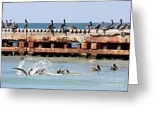 Pelican Pier Greeting Card
