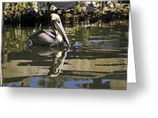 Pelican Reflected Greeting Card