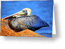 Pelican Rest Greeting Card