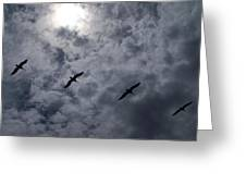 Pelican Sky Greeting Card