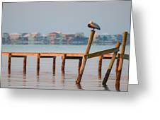 Pelican Sleeping On Sound At Angle Greeting Card