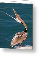 Pelican Stretch Greeting Card