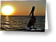 Pelican Sunset 2 Greeting Card