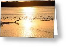 Pelican Sunset Greeting Card