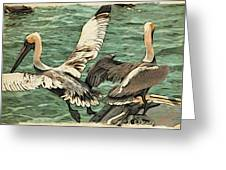 Pelican Take Off Two Greeting Card
