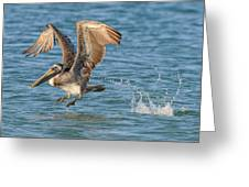 Pelican Taking Off Greeting Card