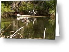 Pelican Temper Greeting Card