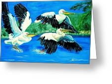 Pelican Trio Greeting Card