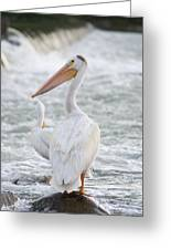 Pelican Watch Greeting Card