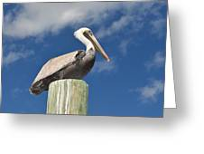 Pelican With Sky Greeting Card