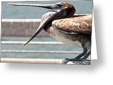 Pelican Yawn - Digital Painting Greeting Card