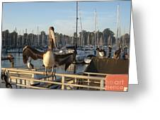 Pelican1 Greeting Card by Theresa Ramos-DuVon