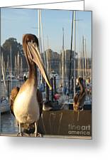 Pelican2 Greeting Card
