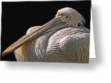 Pelicano Greeting Card