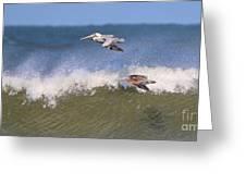 Pelicans 3870 Greeting Card