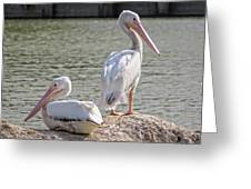 Pelicans By The Pair Greeting Card