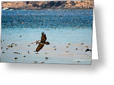 Pelicans Flocking On The Ocean Greeting Card