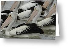 Pelicans Galore Greeting Card