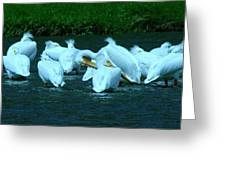 Pelicans Hanging Out Greeting Card