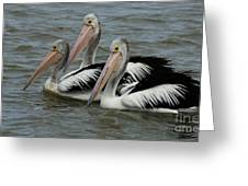 Pelicans In Australia 3 Greeting Card