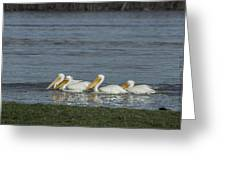Pelicans In Floodwaters Greeting Card