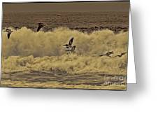 Pelicans In The Surf Greeting Card