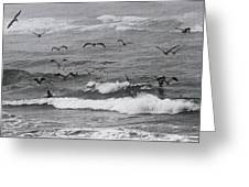 Pelicans Lunching At Ft. Stevens Oregon Greeting Card