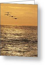 Pelicans Ocean And Sunsetting Greeting Card
