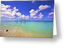 Pelicans Of Aruba Greeting Card