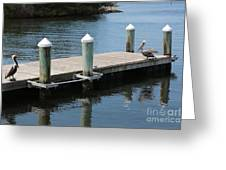 Pelicans On Dock In Florida Greeting Card