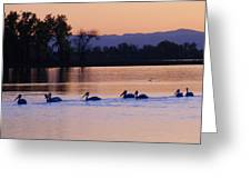 Pelicans On Parade Greeting Card