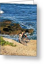 Pelicans On The Cliff - La Jolla Cove Greeting Card